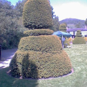 Sorry, it's hideously overexposed I know. In my defence it was taken on a phone camera.